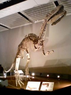 ヤンチュアノサウルス