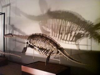 ビシャノプリオサウルス