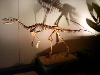 マシアカサウルス (複製)