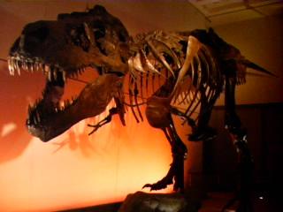 """ティラノサウルス""""スー"""" (複製)"""