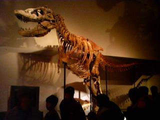 タルボサウルス (実物)