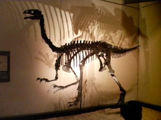 アラシャサウルス (複製)