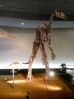 ヒパクロサウルス・ステビンゲリ