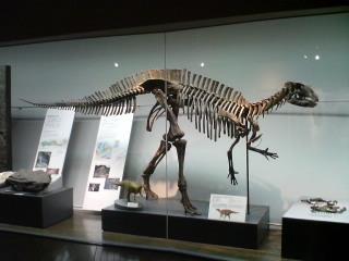 フクイサウルス・テトリエンシス