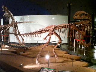 ディロフォサウルス・シネンシス