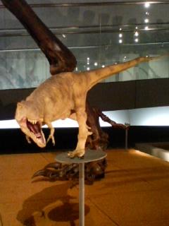 ティラノサウルス・レックスの復元模型