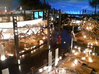 展示室 恐竜の世界